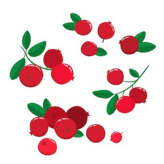 Set cartoon cranberries mit grünen blättern auf weiß isoliert