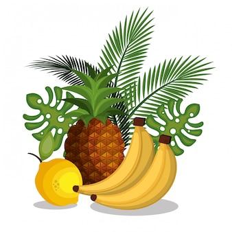 Set cartoon früchte tropicals design