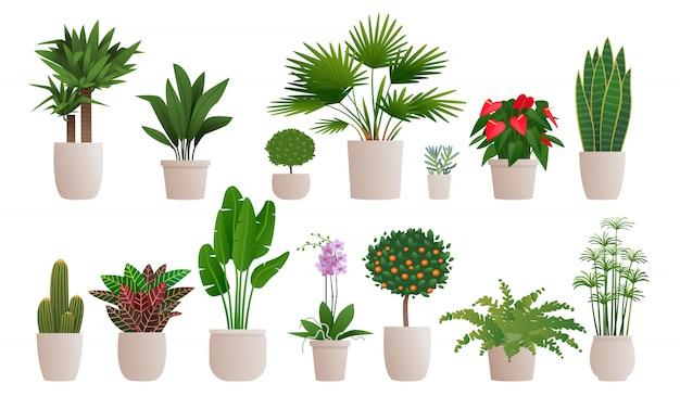 Set dekorative zimmerpflanzen, zum des innenraums eines hauses oder der wohnung zu verzieren. sammlung von verschiedenen pflanzen in töpfen