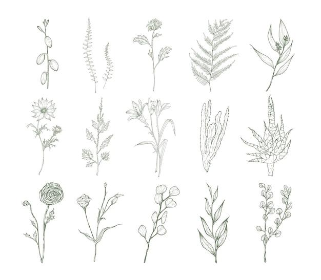 Set detaillierter botanischer zeichnungen von blumen, farnen und sukkulenten isoliert auf weißem hintergrund. bündel blumendekorationen handgezeichnet mit konturlinien. elegante natürliche vektorillustration.