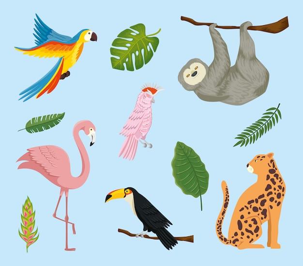 Set exotische tropen der tiere