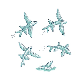 Set fliegende fische springen tauchen und schwimmen.