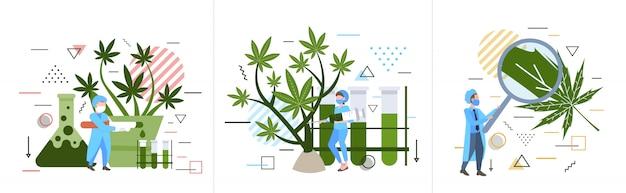 Set forscher überprüfen analyse prüfung marihuana pflanze gesundheitswesen apotheke medizinisches cannabis-konzept horizontal in voller länge