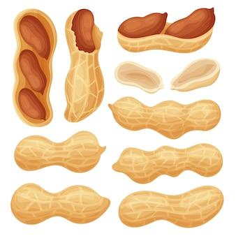 Set frische erdnüsse ganz und zerkleinert. erdnussfrüchte in verschiedenen formen und im rahmen von nahaufnahmen. bunter einfacher flacher karikaturstil. isolierte illustration.
