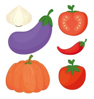 Set frisches und gesundes gemüse