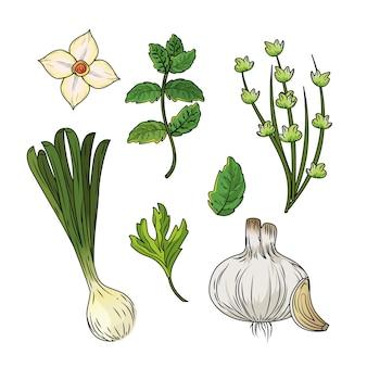 Set kräuter und gewürze pflanzen und organessen