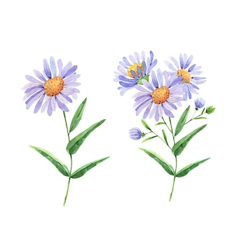 Set lila blumen vektor aquarell handbemalt für hochzeitseinladungen dekor und design