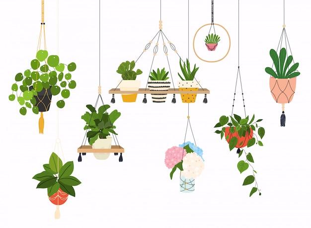Set makramee kleiderbügel für pflanzen in töpfen wachsen. blumentopf lokalisierte gegenstände, houseplantblumentopfsammlung.