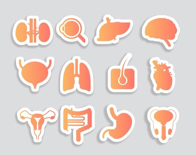 Set menschliche innere organe anatomische magen leber nieren lunge herz gehirn nieren augenmuskeln symbole sammlung anatomie gesundheitswesen medizinisches konzept horizontal