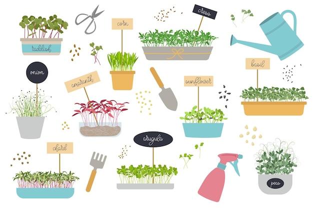 Set mit eingetopften microgreens-werkzeugen für die gartenarbeit von microgreens zu hause, samen und sprossen flat vector