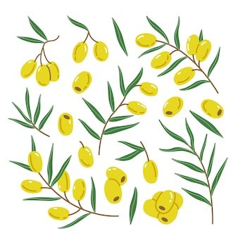 Set mit grünen olivenzweigen und blättern in einem einfachen niedlichen cartoon-flachstil