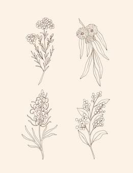 Set mit strichzeichnungen australischer einheimischer pflanzen und blumen