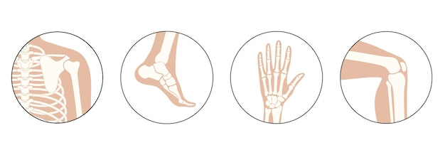 Set mit symbolen für menschliche schulter, knie, knöchel und handgelenk.