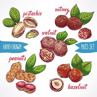 Set mit verschiedenen bunten nüssen. handgezeichnete illustration