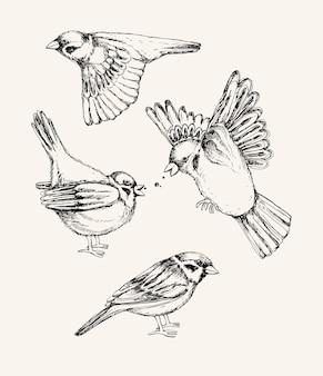 Set mit verschiedenen fliegenden und sitzenden spatzen. hand gezeichnete illustration.