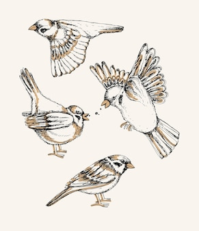 Set mit verschiedenen fliegenden und sitzenden spatzen