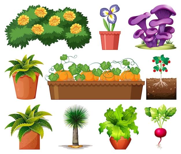 Set mit verschiedenen pflanzen in töpfen, isoliert auf weiss