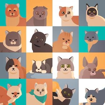 Set niedliche katzenköpfe flauschige entzückende cartoon tiere hauskatze heimtiere sammlung flaches porträt