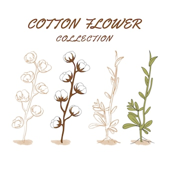 Set_of_hand_drawn_cotton_flower_collection