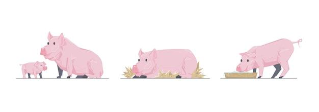 Set rosa schweine auf weißem hintergrund
