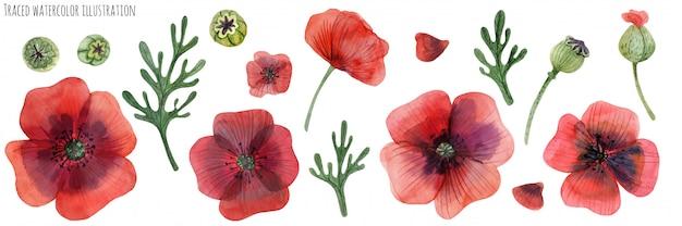 Set rote mohnblumen