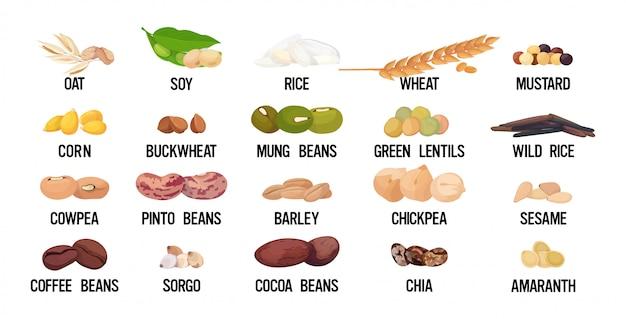Set samen bohnen und getreide bio gesunde vegetarische lebensmittel sammlung