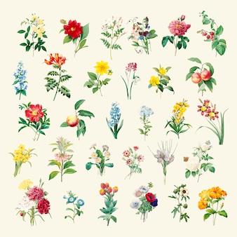 Set schöne blühende Wildblumen