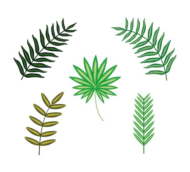 Set tropische blattanlagen