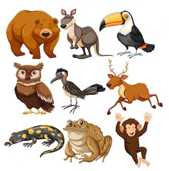 Set verschiedene tiere