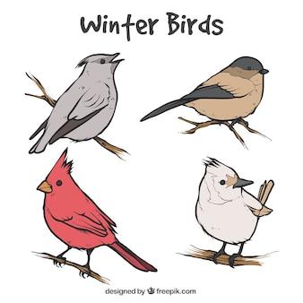 Set vogelskizzen auf zweigen