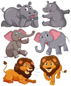 Set von afrikanischen tieren