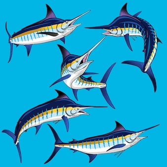 Set von blue marlin für die wildfischsammlung