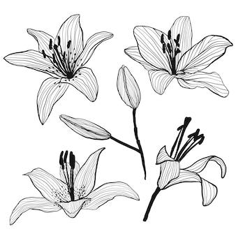 Set von blütenknospen und lilien