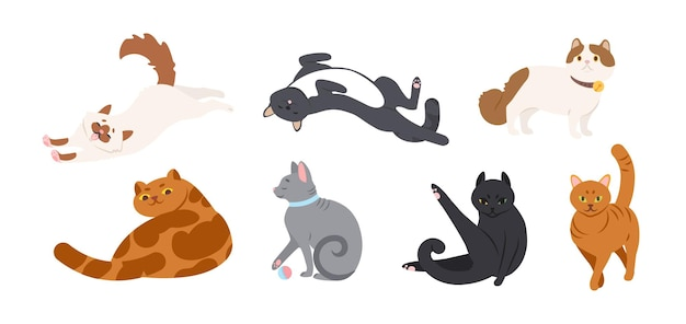 Set von entzückenden katzen verschiedener rassen, die liegen, sitzen, sich strecken, mit ball spielen. bündel von lustigen reinrassigen haustieren lokalisiert auf weißem hintergrund. flache cartoon-vektor-illustration.