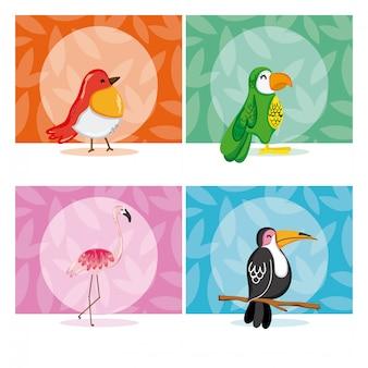 Set von exotischen vögeln