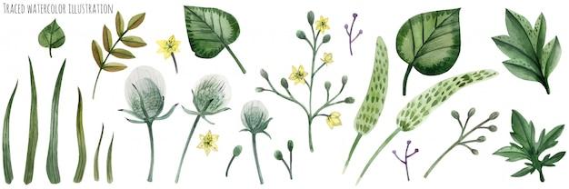 Set von forstpflanzen