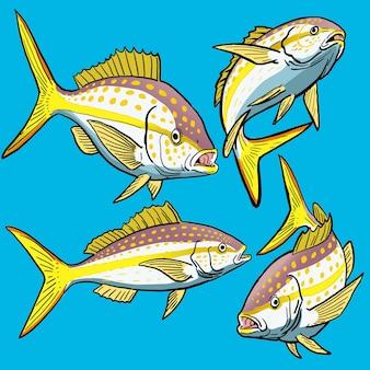 Set von gelbschwanz-schnapperfischen für die wildfischsammlung