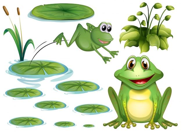 Set von grünem frosch und seerose