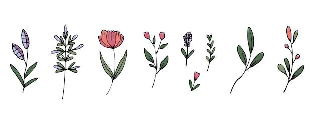 Set von handgezeichneten blumen und blättern dekorative schönheit
