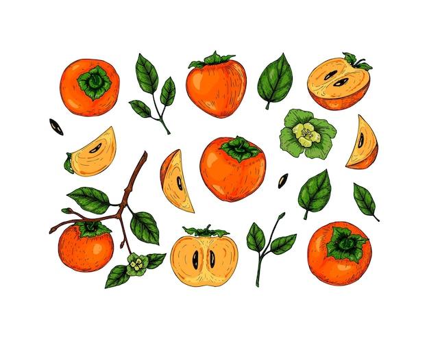 Set von handgezeichneten kakifrüchten, zweigen und blättern
