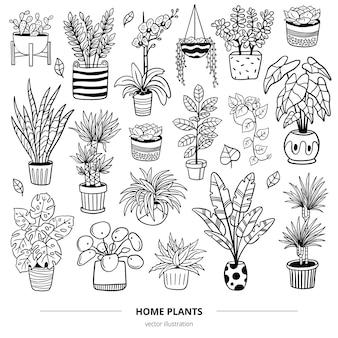 Set von handgezeichneten pflanzen und blumen