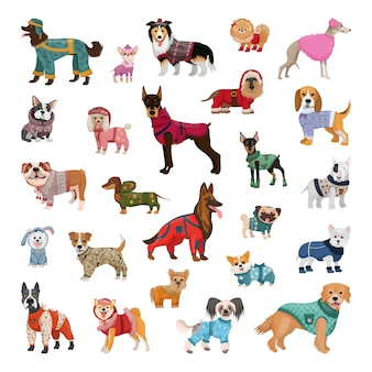 Set von hunden verschiedener rassen in winteroveralls, pullovern, isolierten geschirren.