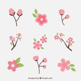 Set von kirschblüten