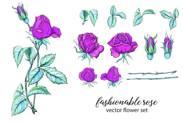 Set von leuchtenden rosenfarben. rose ist rosa.