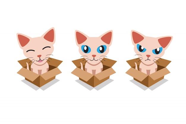 Set von niedlichen sphynx-katze im karton