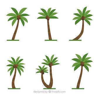 Set von palmen mit kokosnüssen