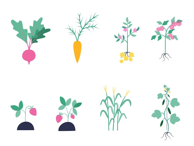 Set von pflanzen kartoffeln, rüben, karotten, tomaten, gurken, erdbeeren, mais.