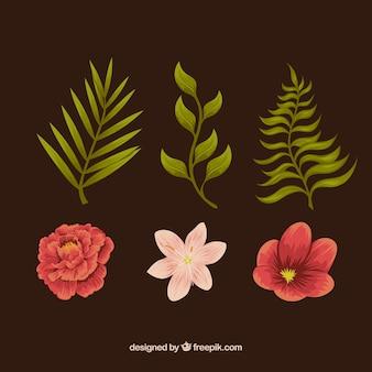 Set von pflanzen und blumen