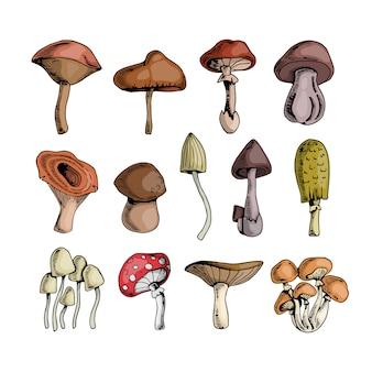 Set von pilzen