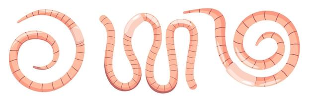 Set von regenwürmern, bodenregenwürmern, kompostinsekten von rosa oder roter farbe. natur, tierwelt, garten wirbellose würmer elemente isoliert auf weißem hintergrund. cartoon-vektor-illustration